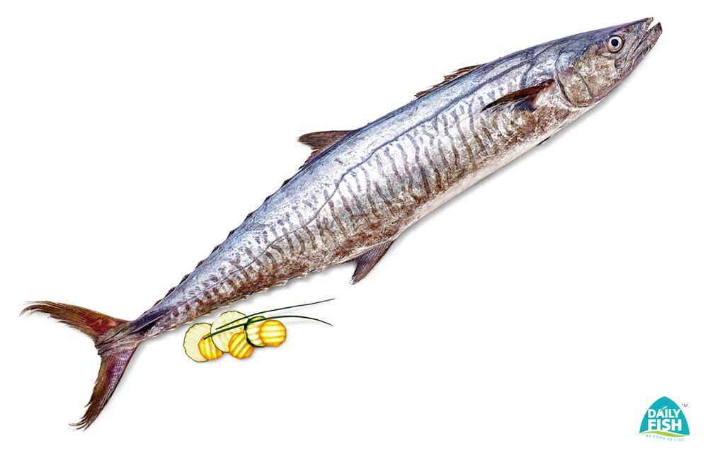 buy seer fish online aiykoora neymeen surmai anjal