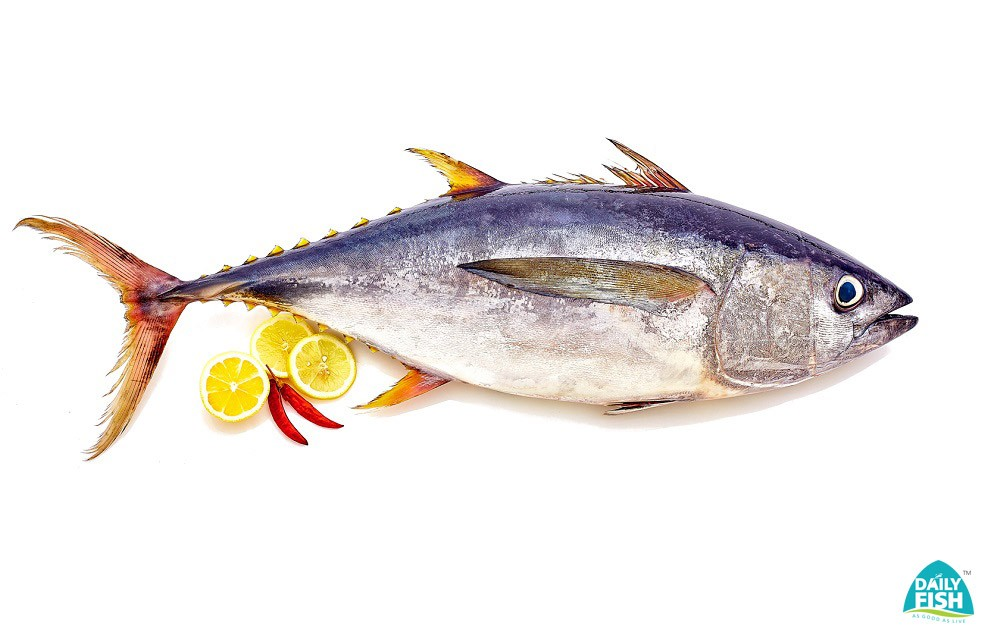 Buy fish seafood online bengaluru cochin trivandrum for Where to buy fish online