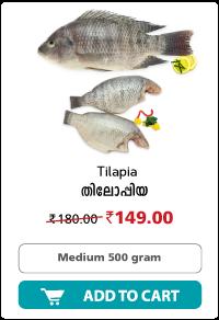 Dailyfish tilapia