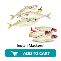 Dailyfish Indian Mackerel
