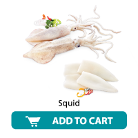 Dailyfish Squid